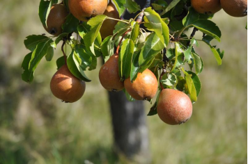 Asso Fruits Anciens de l'Orpierrois